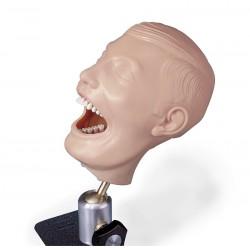 Mannequin dental