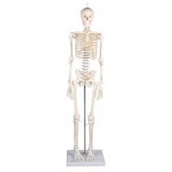 Mini squelette Patrick