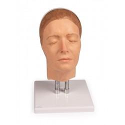 Modèle tête pour injection faciale