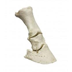 Pied de cheval flexible